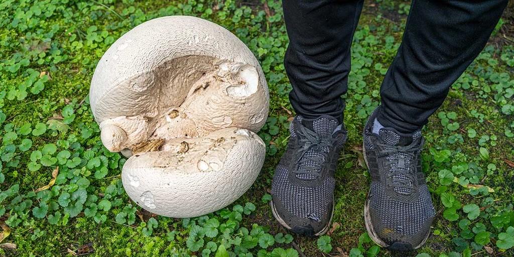 What Are Puffball Mushrooms