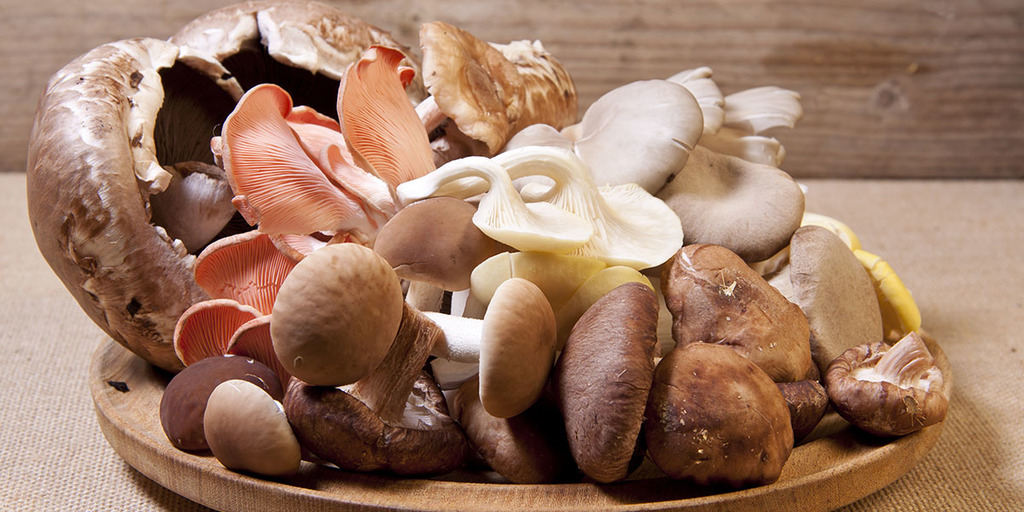 What Kinds of Edible Mushrooms Are There?