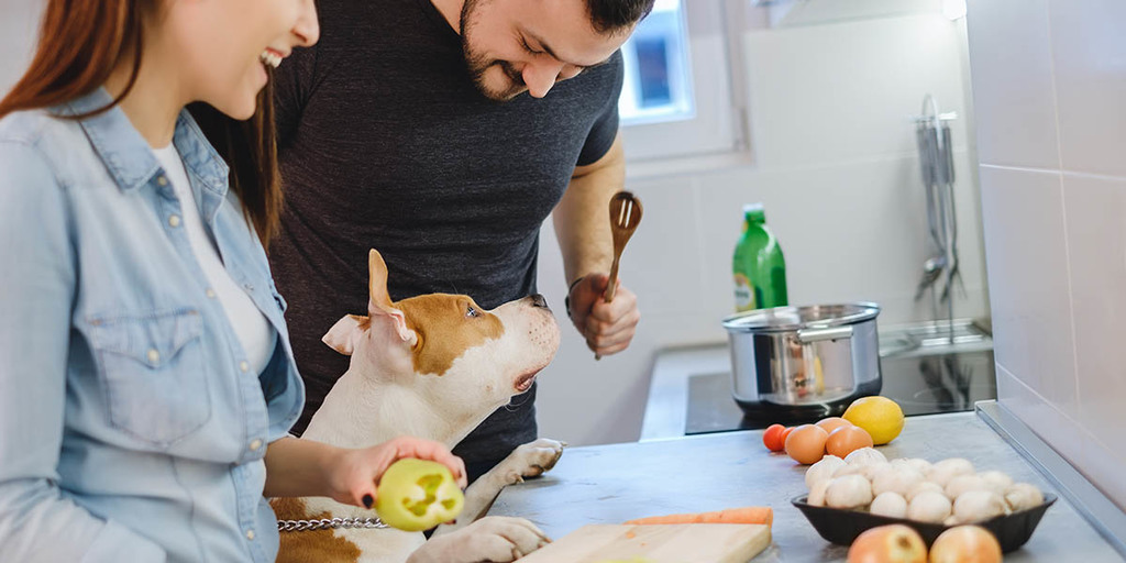 Do Mushrooms Have Health Benefits For Dogs