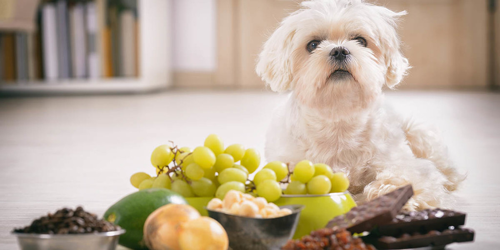 What Other Foods Are Dangerous For Dogs