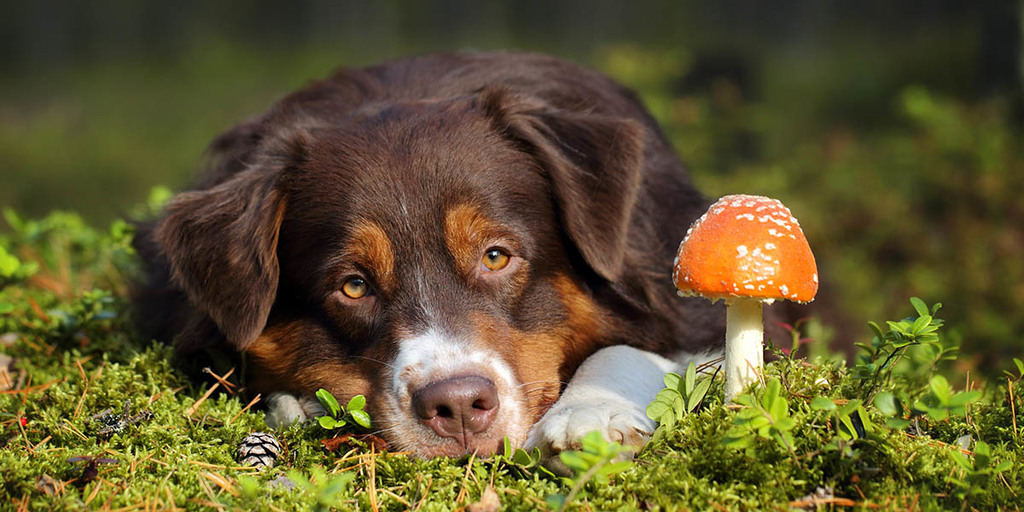 Which Mushrooms Shouldn't You Feed Your Dog