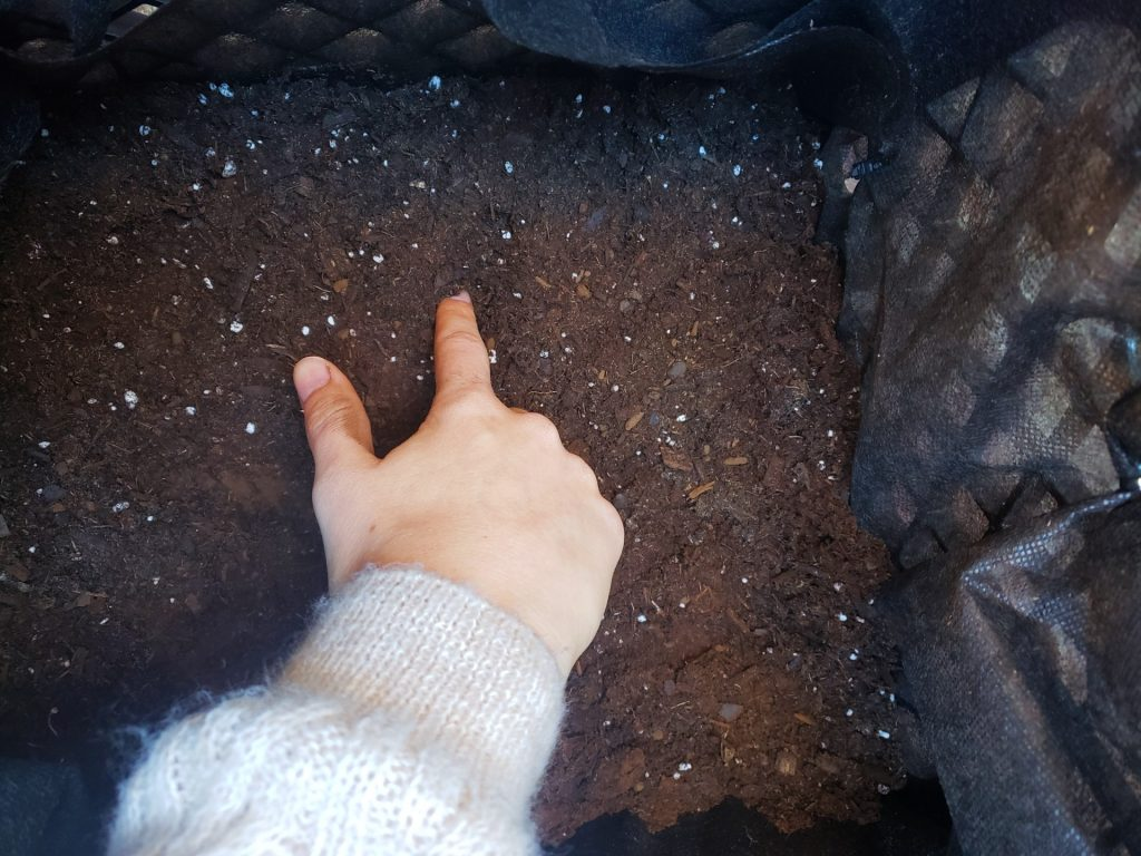 Pressing seeds into soil
