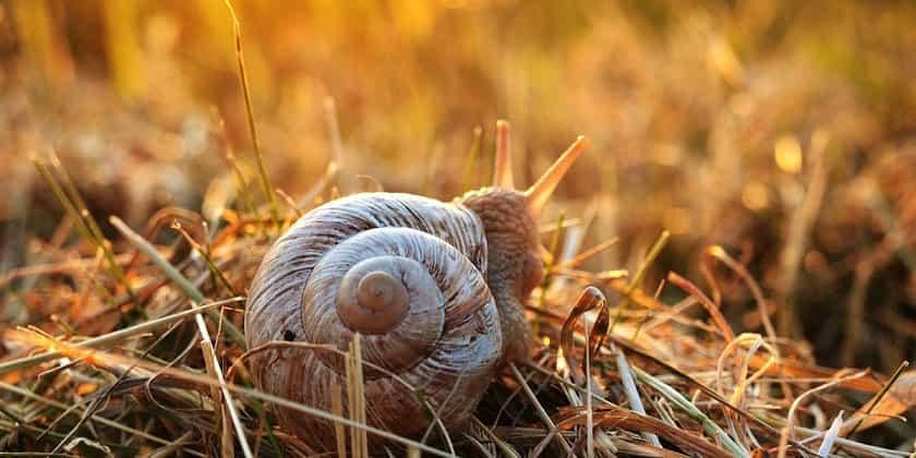 farming-snails-min