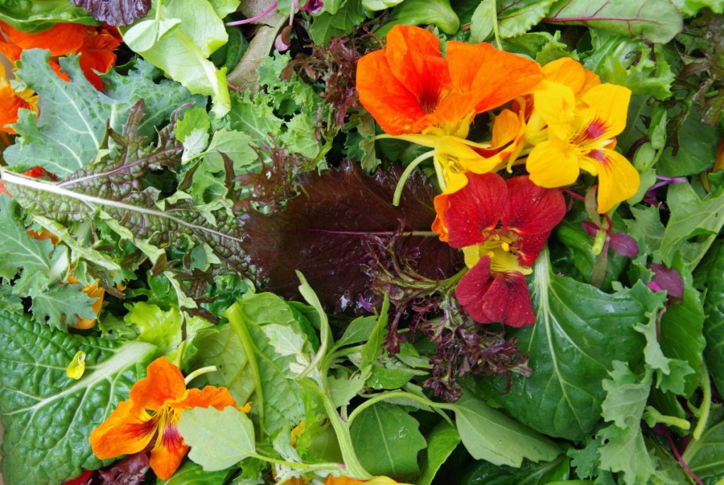 Variety os salad greens and edible flowers