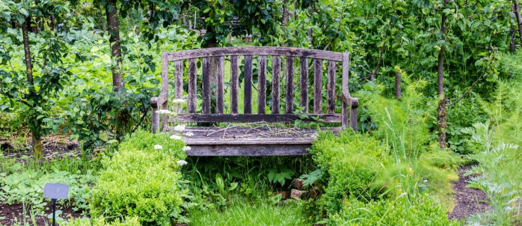 A forest garden design with seating for relaxation