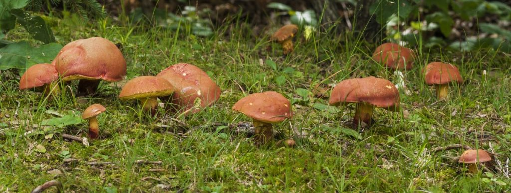 mushrooms reproducing in a forest