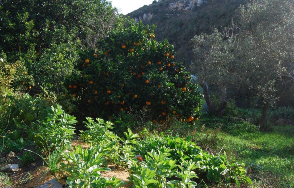permaculture forest garden design