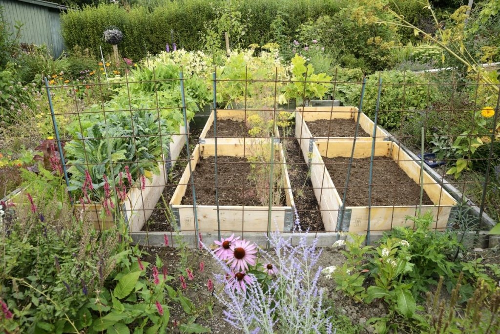 A front yard permaculture garden