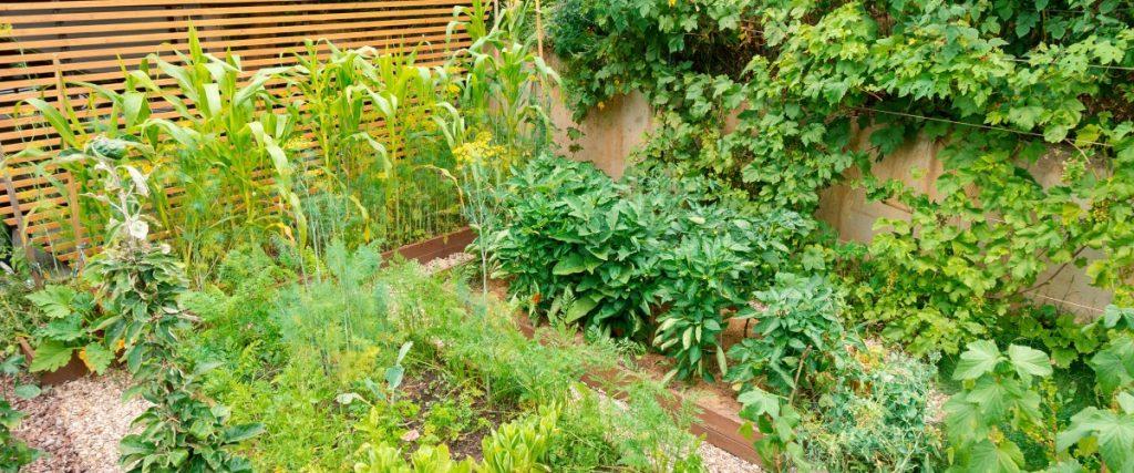 Backyard homestead ideas