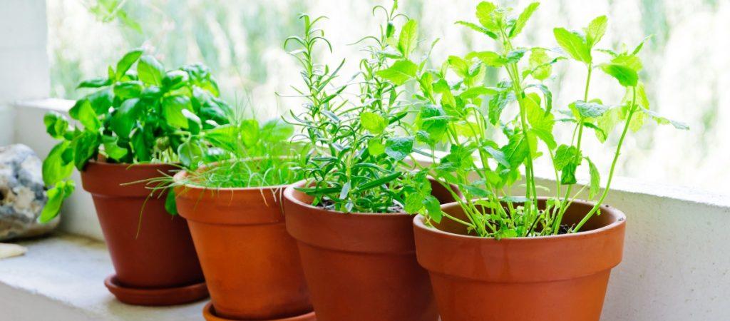 Windowsill container herb garden