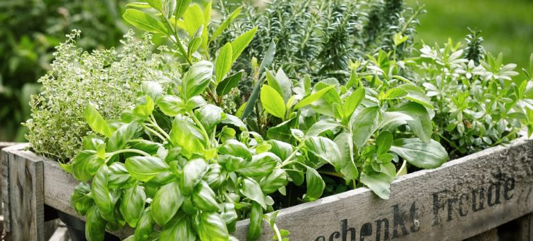 Grow herbs for profit