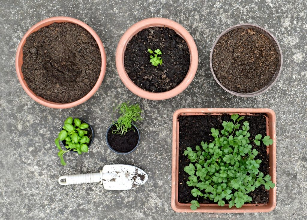 planting a container herb garden in various pots