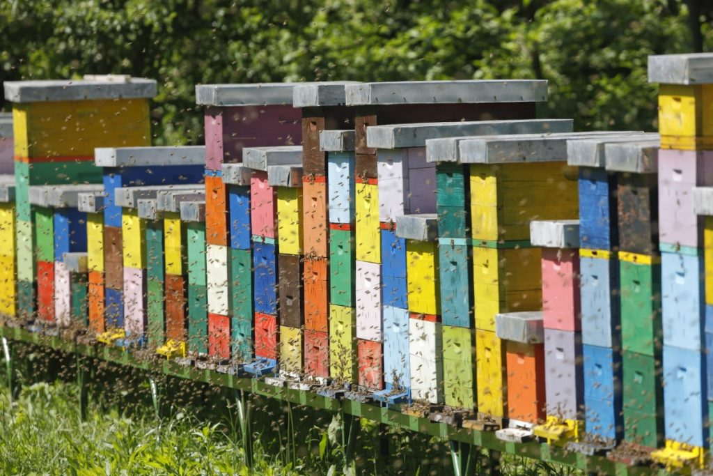 How many hives do you need when beekeeping for profit?