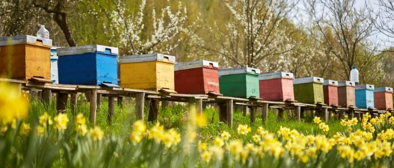 Beekeeping for profit