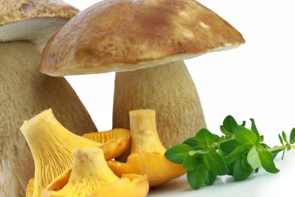 Chanterelle and porcini mushroom stems
