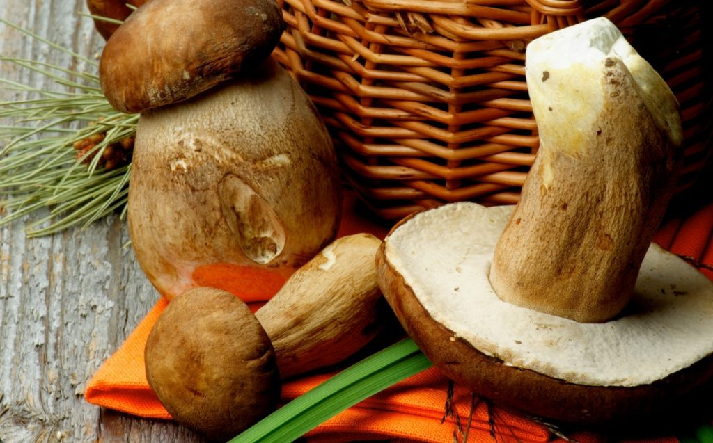 Can you eat mushroom stems? These wild mushrooms have thick fibrous stems that are best used to flavor soups and broths.