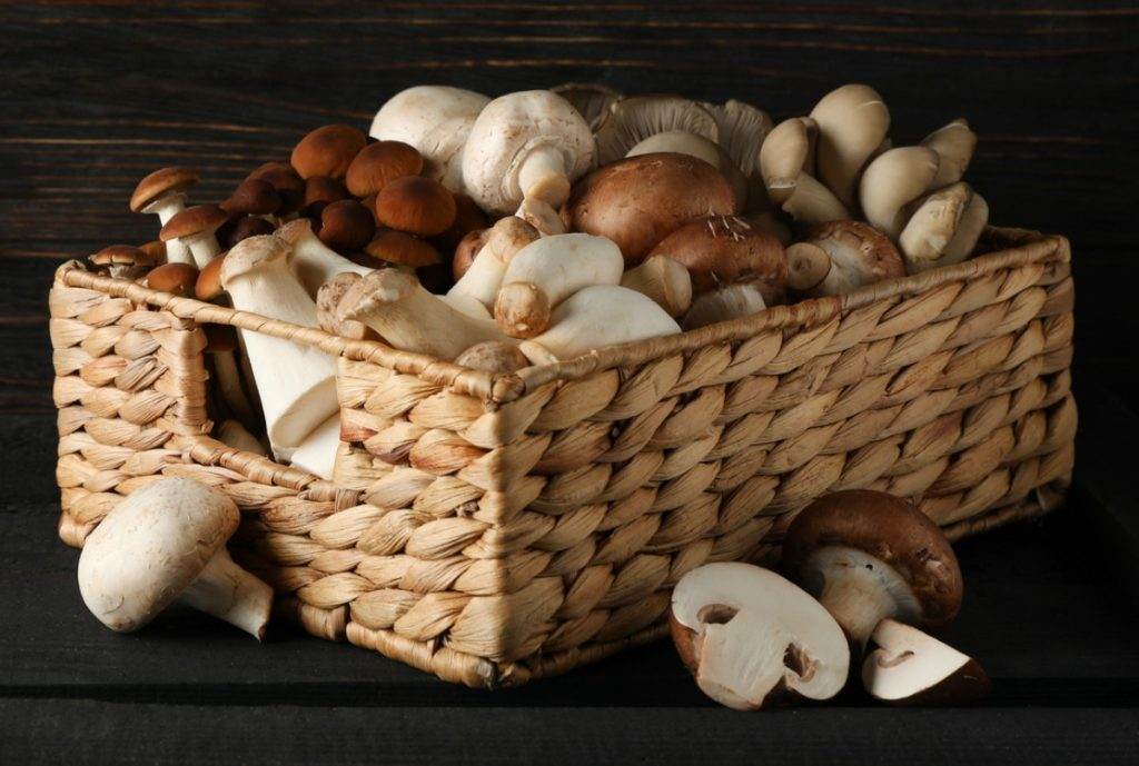Basket with different types of edible mushrooms.