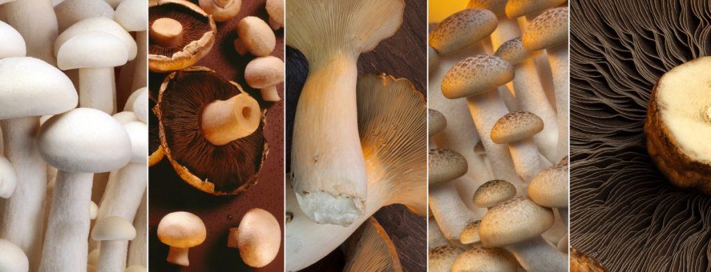 Can you eat mushroom stems?